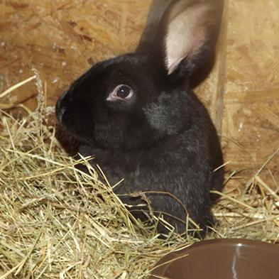 Tierpatenschaft_Pippi-Lotta