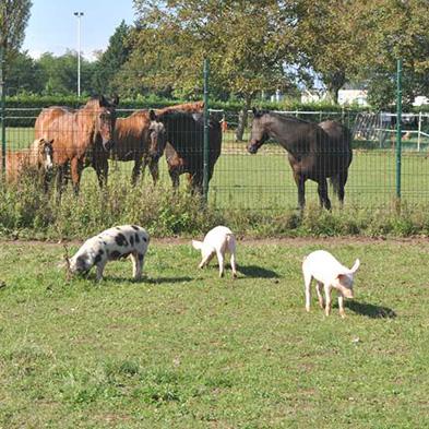 Tierpatenschaft_Schweine