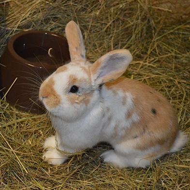 Tierpatenschaft_willi